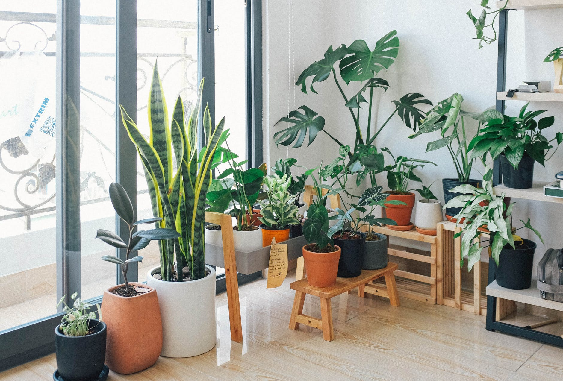 Most Demanding Indoor Plants to Liven Up Your Home Décor