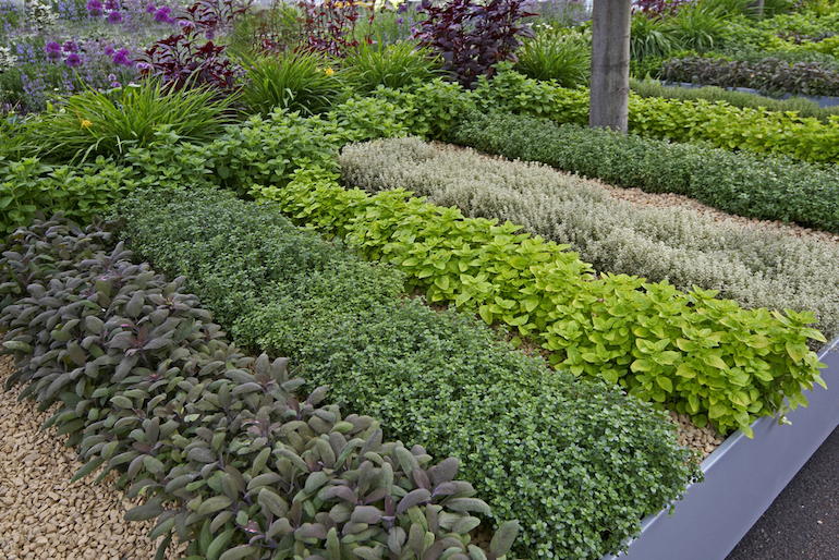 Tips How to maintain Herbs Garden on your own at Home 1