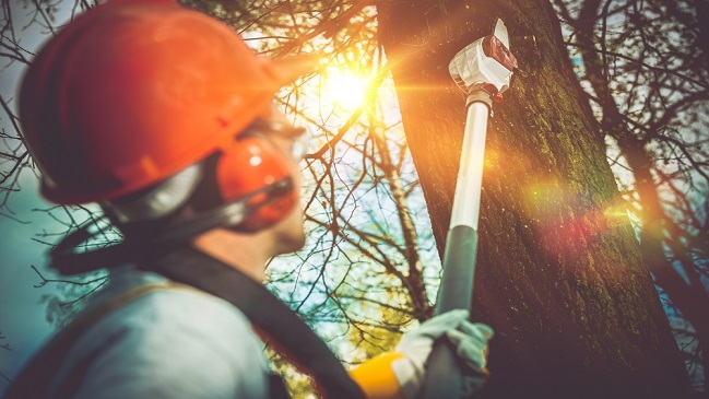 An Overview Of Tree Lopping? 2